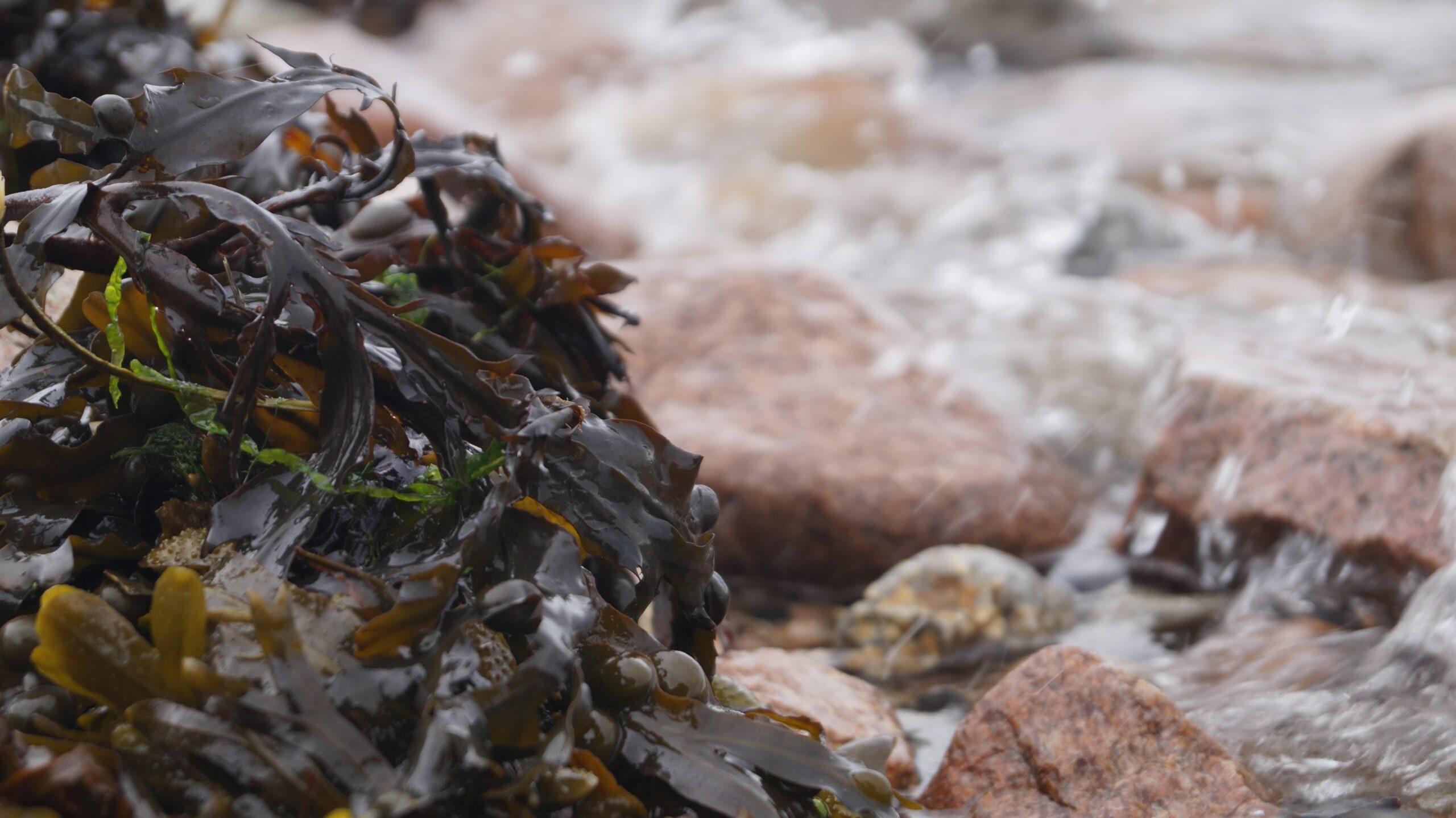 Marine Bioeconomy: Free Ideation to Market Coaching Service